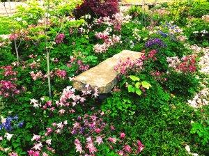may-garden-5-2014