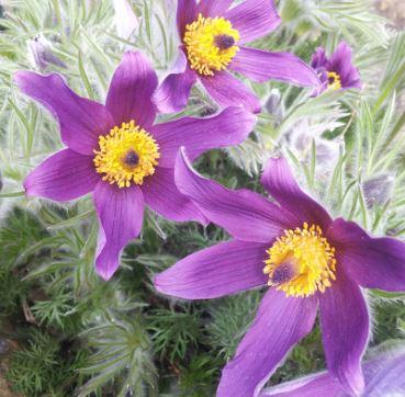 PLANT FAIR - 30th May 2015, 1-4pm
